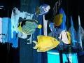 2-03-pesci