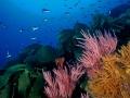 Kelp+corallo 209 - ONDA