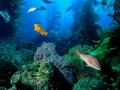 Kelp paesaggio 164 - ONDA