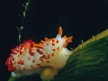 Nudibranco 347