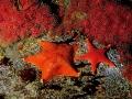 Stelle-e-coralli-22