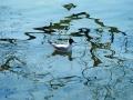Gabbianello-sull'acqua--A9