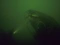 14 - Forel in immersione nel verde+ sub