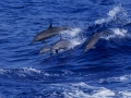 Delfini 434