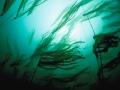 Kelp-in-corrente-69