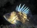 Rockfish 190- ONDA