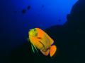 Pesce-Angelo-142