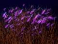Anthias lilla nel corallo 1165